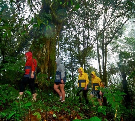 Rain Forest Trekking at Bedugul in Bali