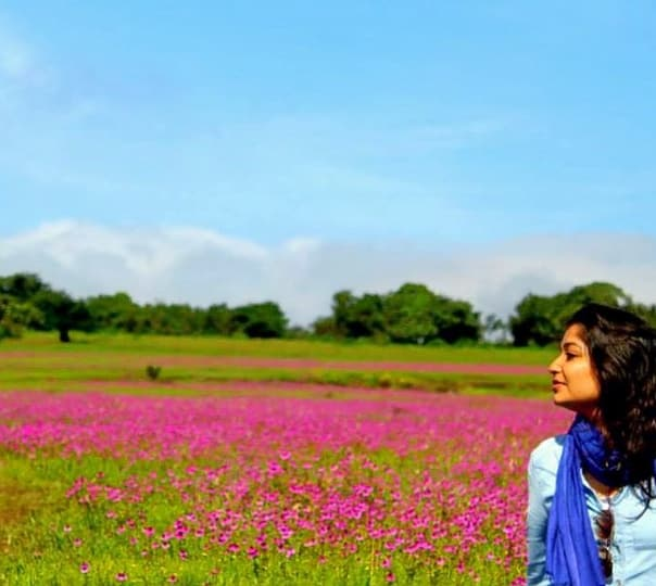 Explore Valley of Flowers at Kaas Plateau, Satara (from Mumbai)