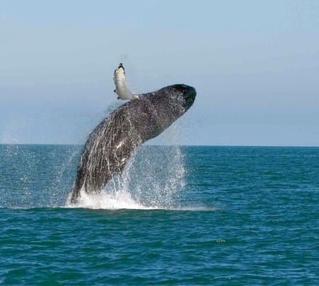 Blue Whale Watching Tour in Bentota and Koggala