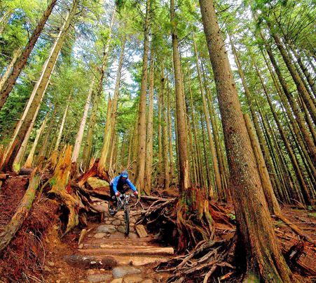 Rent a Mountain Bike in Chail