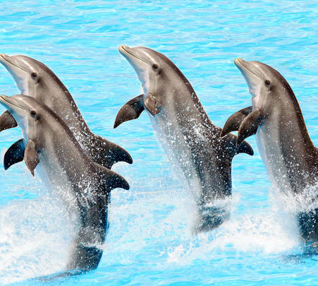 Dolphin World Pattaya Flat 15% off