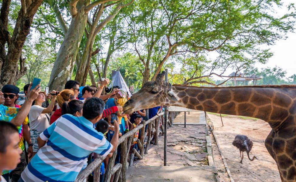 Khao Kheow Open Zoo Ticket Flat 30% Off