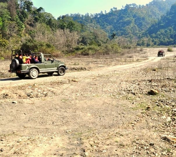 Stay at Forest Rajaji National Park in Uttarakhand
