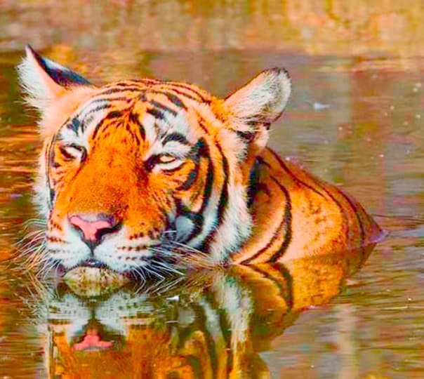 Golden Triangle with Wildlife and Tigers