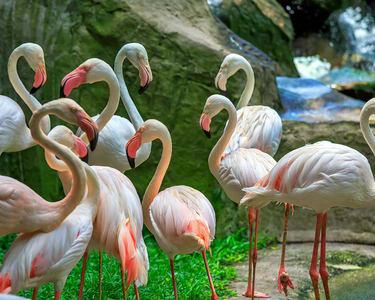 Kl Bird Park Tickets, Kuala Lumpur @ Flat 25% off