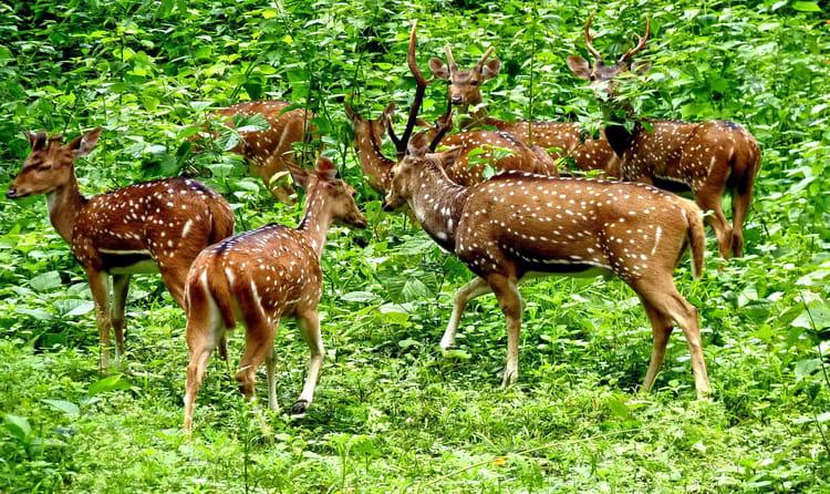 Wildlife - Kerala Holiday Package