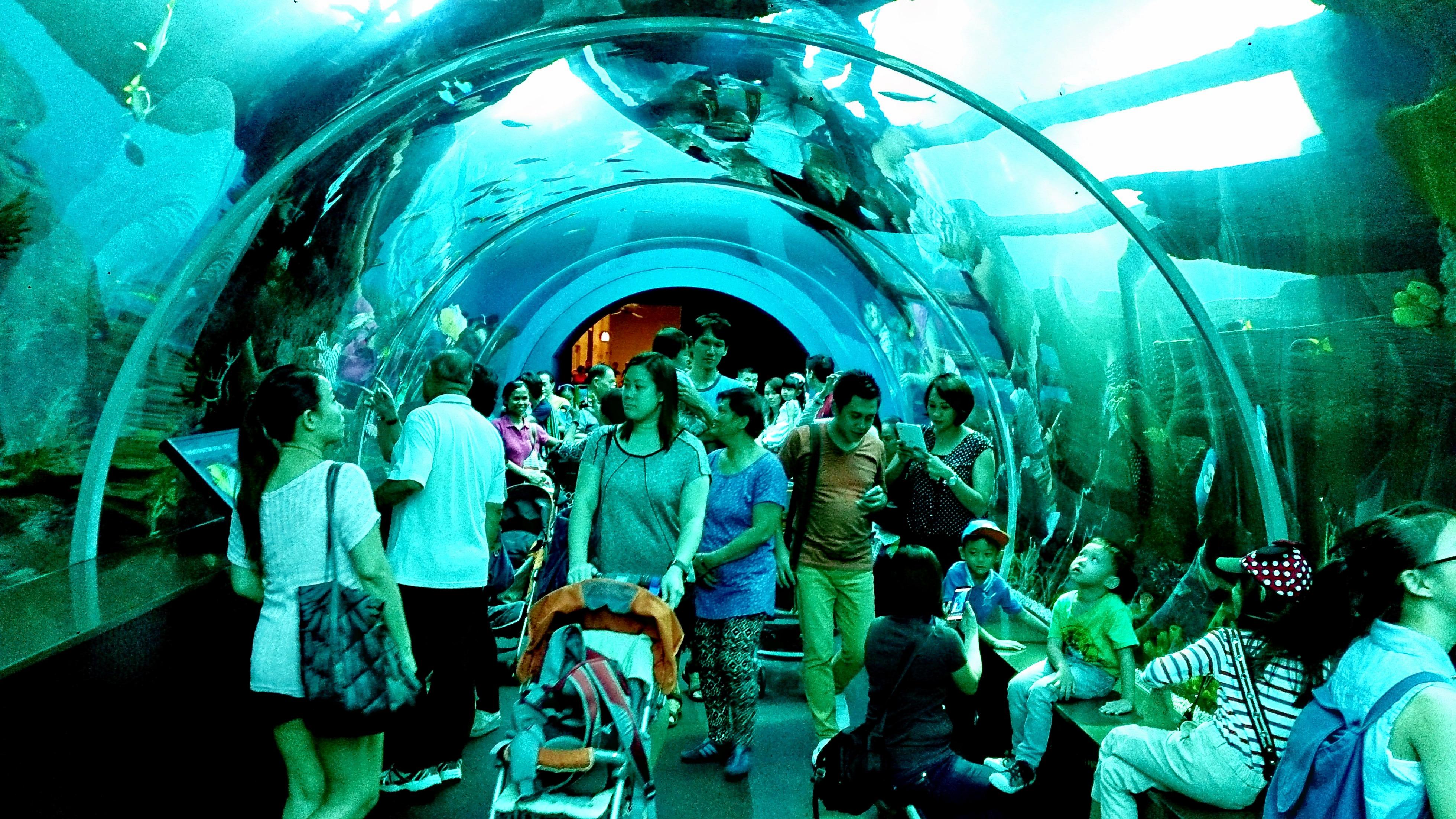 1465794075_sea_aquarium.jpg