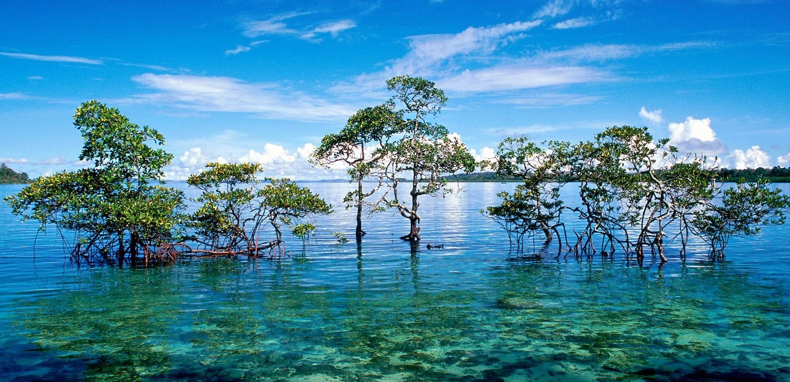 Havelock_island__andaman_and_nicobar_islands__india.jpg