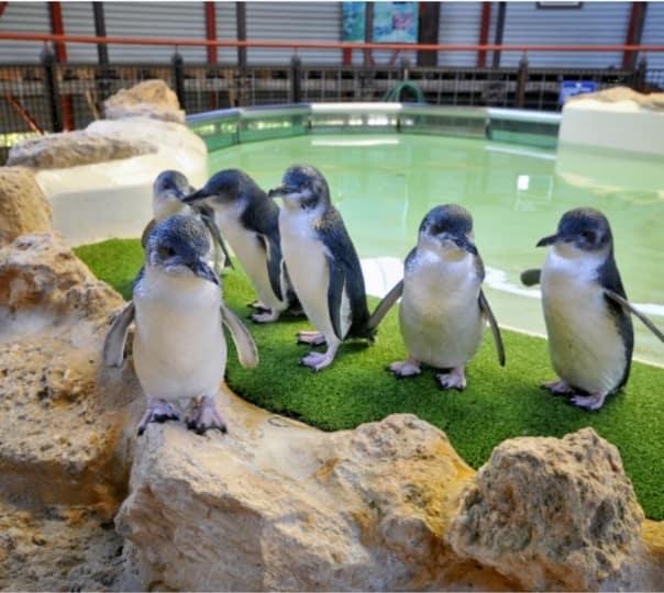 Trip to Penguin Island and Mandurah