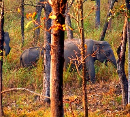 3 Days Wildlife Adventure in Kerala
