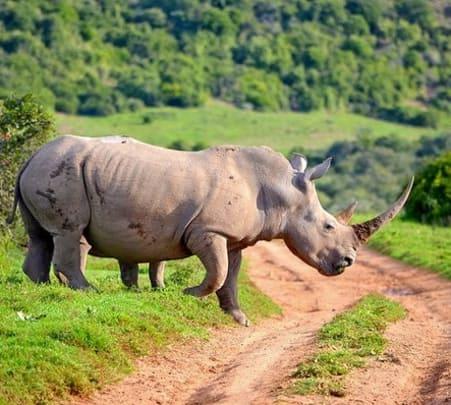 Kaziranga, Rhinoland Tour