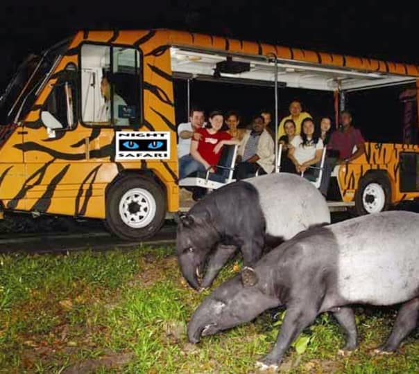 Night Wild Life Safari in Bali