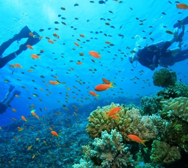 Scuba Diving Special Tour at Konkan