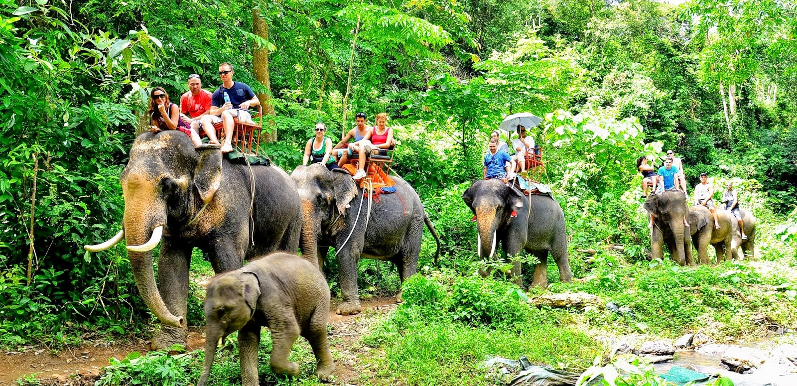 Image result for elephant trekking krabi