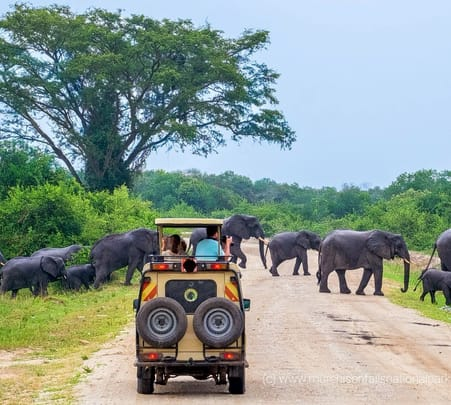 Yala National Park Safari Tour - Flat 15% off
