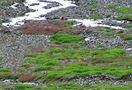Trek_to_bhabha_pass__himachal_10.jpg
