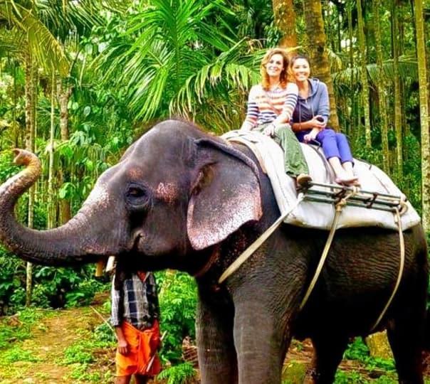 Elephant Ride through Plantation in Thekaddy