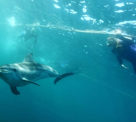 Swim with Dolphins and Seals in Melbourne