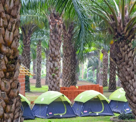 Rubber Plantation Camping Expereince in Wayanad