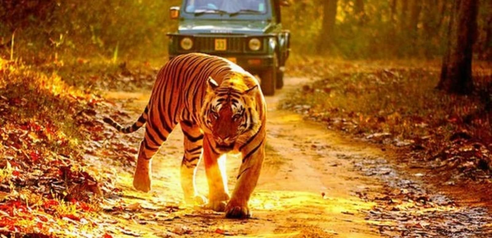 Kanha-jeep-safari.jpg