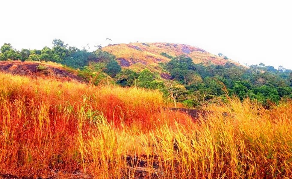 Wayanad Coffee Plantation Stay Experience