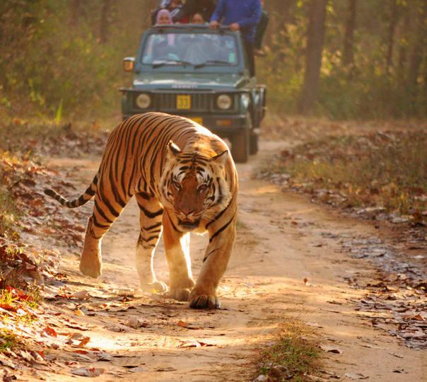 Kanha and Bandhavgarh National Park Visit with Sightseeing in Khajuraho