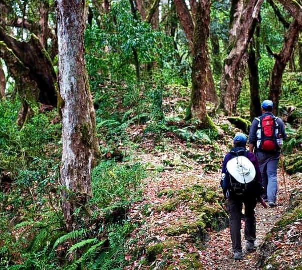 Mighty Sada and Bhatwada Waterfall Trek, Belgaum