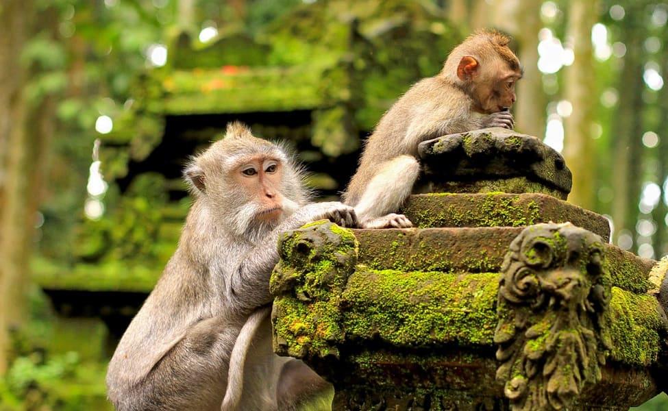 Hasil gambar untuk ubud monkey forest