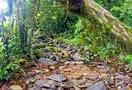 Kudremukh_trekking_trail__chikmagalur_30.jpg