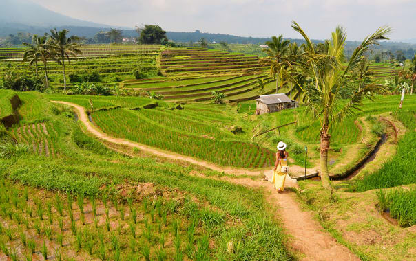 1480652251_rice_fields_at_jatiluwih._bali__indonesia.jpg