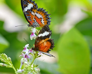 Tegenungan Waterfall Tour with Butterfly Park & Monkey Forest Flat 25% off