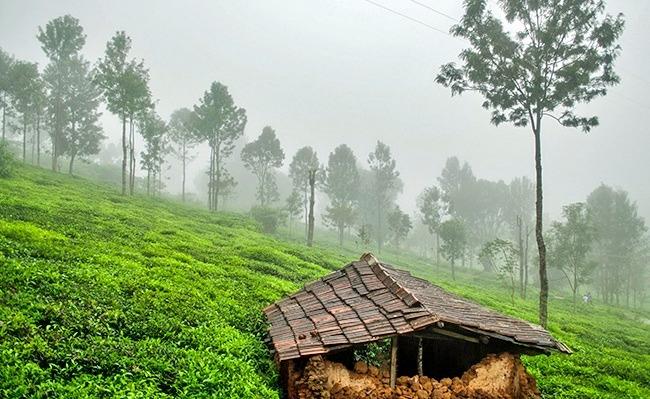 1586965922_kotagiri_tamil_nadu.jpg