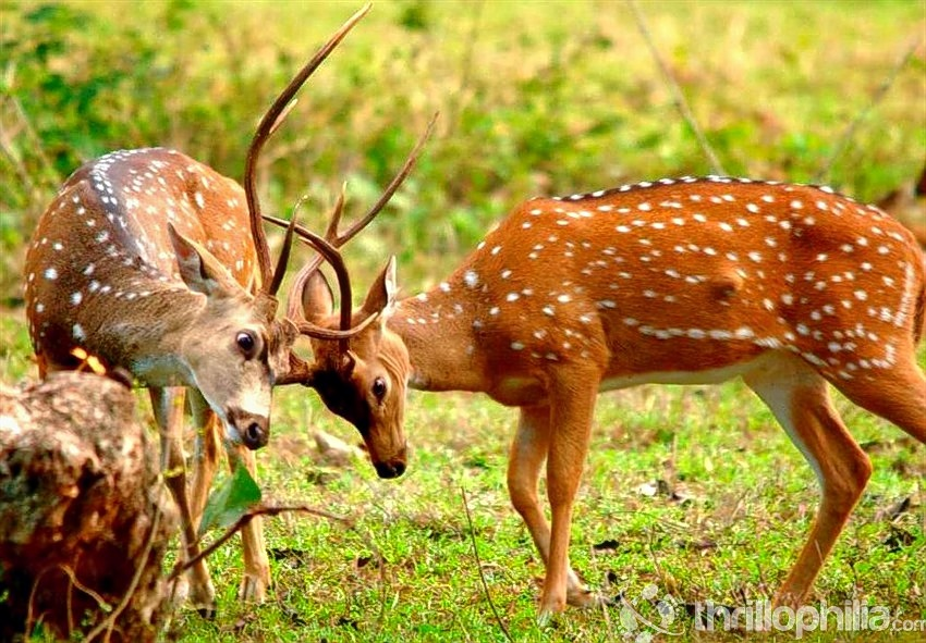 Bandipur_wildlife_safari_(2).jpg