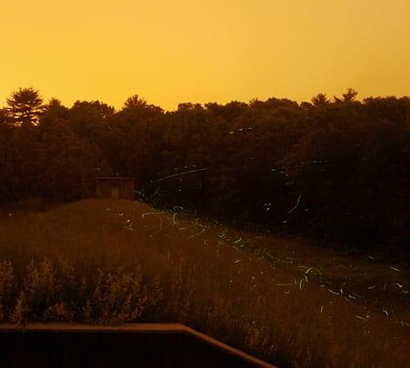 Fireflies Trek to Siddhagad
