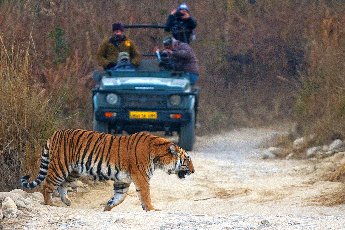 1596628133_filming_of_bengal_tiger_in_jim_corbett_national_park.png