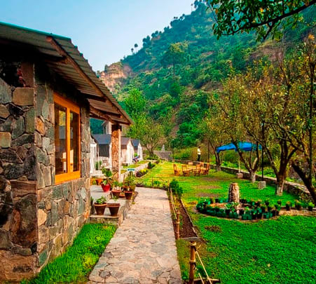 Luxury Camping at Shoghi, Shimla