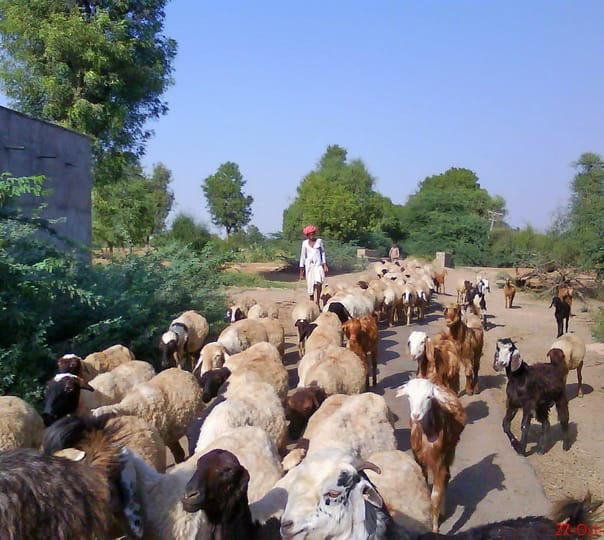 Village Tour of Marwar