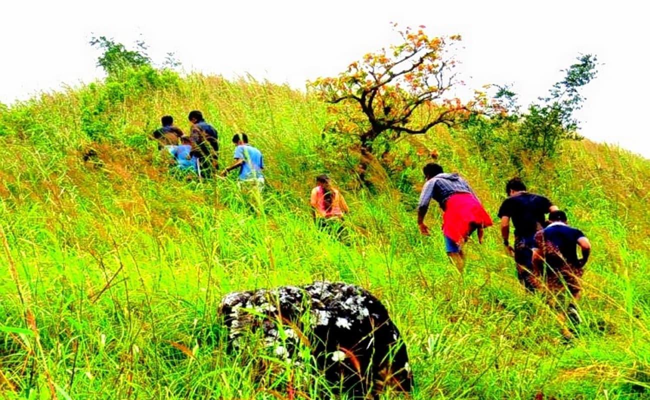Wayanad Coffee Plantation Stay Experience | Thrillophilia