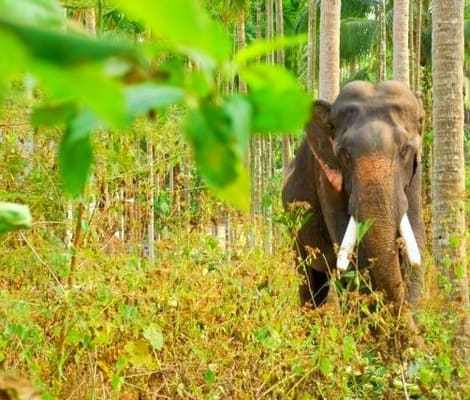 Wildlife Safari At Tholpetty Sanctuary In Wayanad