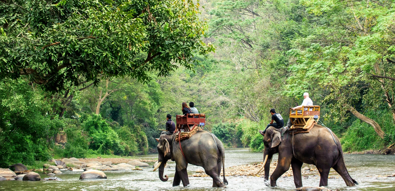 Image result for images of elephant trekking