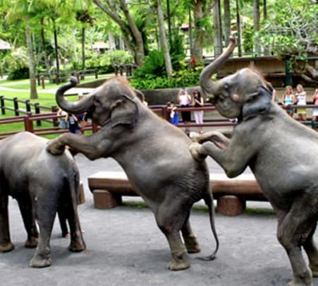 Visit to an Elephant Safari Park in Ubud