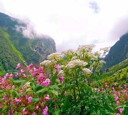 Valley of Flowers with Hemkund Sahib Tour Package
