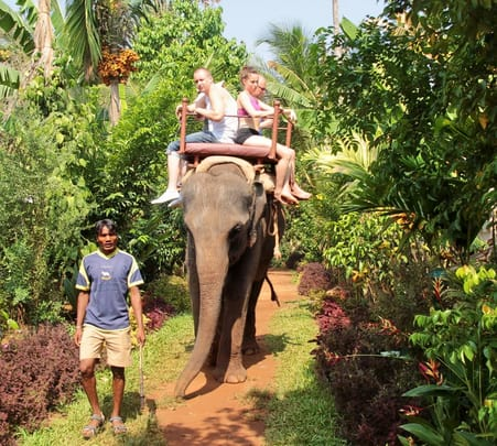 Day Out with Elephants At Collem in Goa