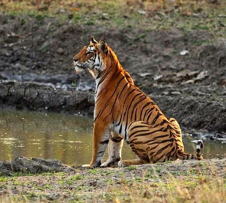 Pench National Park Wildlife Safari