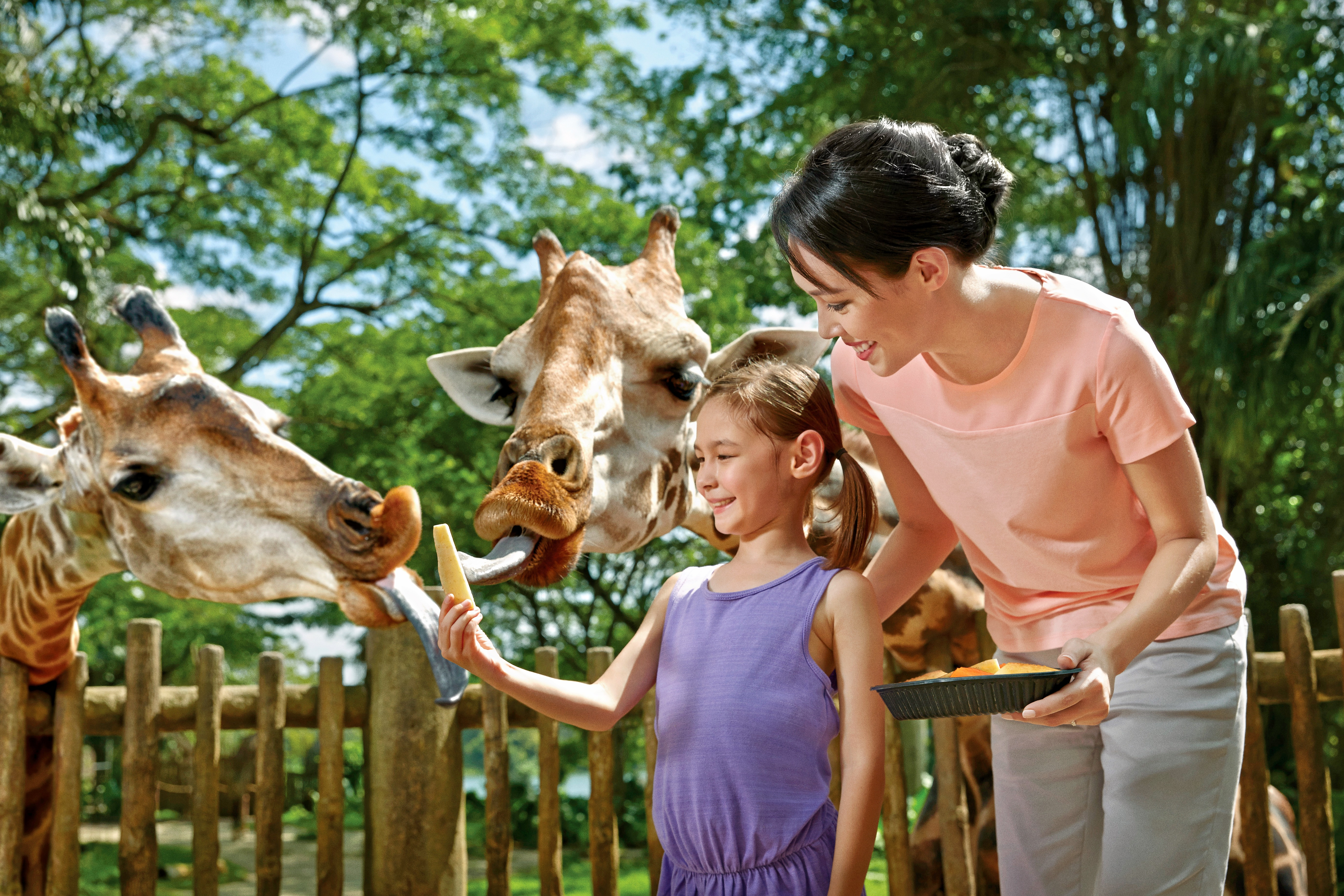 Zoo_giraffefeeding_477_main_v2_03.jpg