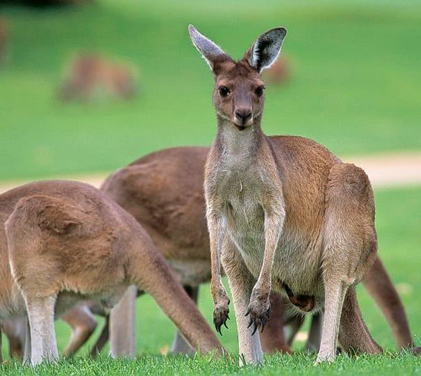 Tour to Swan Valley and Caversham Wildlife Park