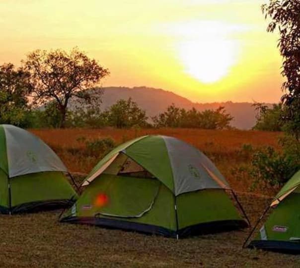 Night Camping, Dandeli