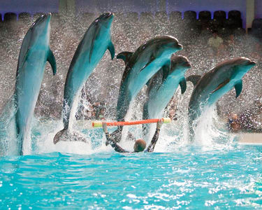 Dubai Dolphinarium Tickets - Flat 20% off