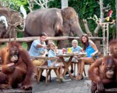 Breakfast with Orangutans at Bali Zoo