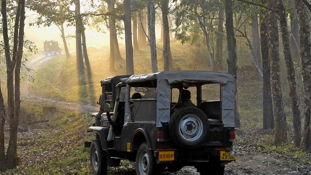 1587460947_jeep_safari_wayanad_wildlife_sanctuary20191112080144_963_1.jpg